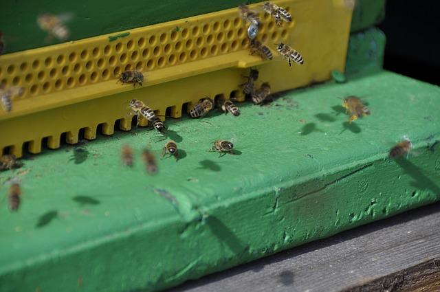 Także Rosję dotyka istotny spadek liczebności pszczół