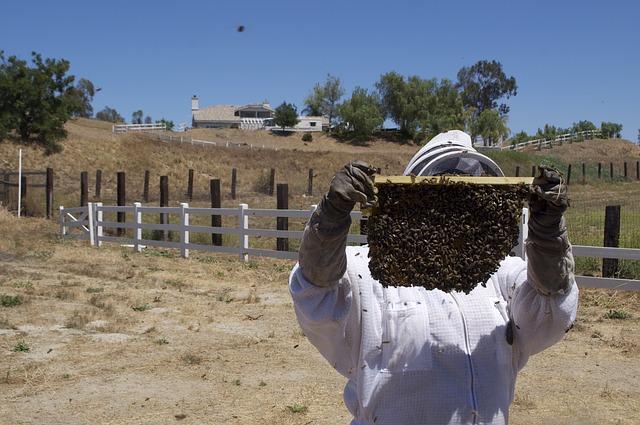 Sprzęt pszczelarski, który musi się znaleźć w każdej pasiece