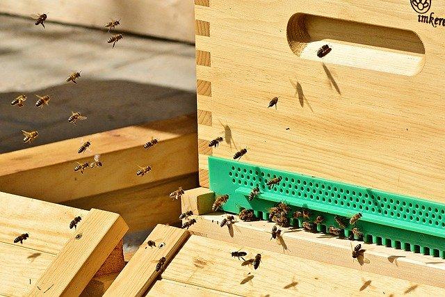 Miejskie pszczoły silniejsze od pszczół z terenów wiejskich